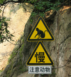 Beware of monkeys!